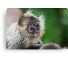 Baby Spider Monkey Canvas Print