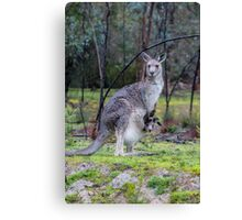 Roos in the Rain Canvas Print