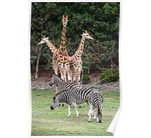 Animal Kingdom II Poster