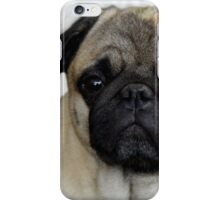 mops little dog iPhone Case/Skin