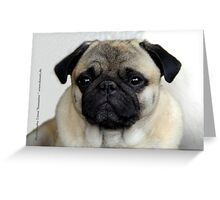 mops little dog Greeting Card