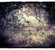 Den in the Bramble by Barbara Wyeth