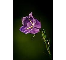 Morning sunbathing - small flower Photographic Print