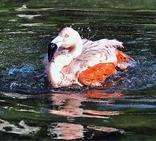 Chilean Flamingo by Savannah Gibbs