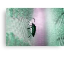 Green Stink Bug Canvas Print