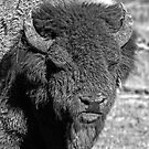 Battle Worn Bull by JamesA1