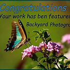 Backyard Photography Challenge by myraj