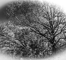 Black and White Trees by Roses1973