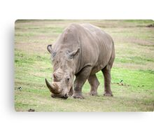Regal Rhino Canvas Print