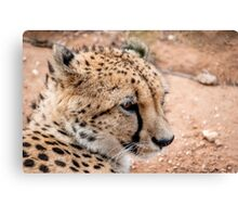 Cheetah II Canvas Print