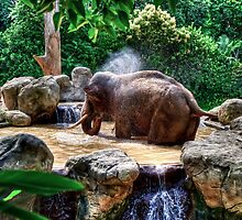 Jumbo Shower by Ray Warren