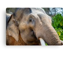 Bull Elephant Portrait Canvas Print