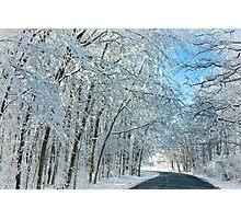 Snowy Winter Trees Photographic Print