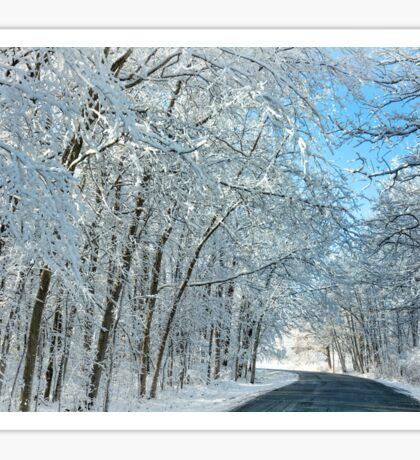 Snowy Winter Trees Sticker