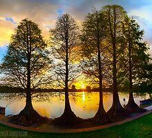 Sunset Cypresses by Lakelander