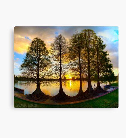Sunset Cypresses Canvas Print