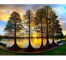 Sunset Cypresses Photographic Print
