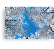 Snowy Winter Scene Metal Print