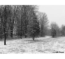 Winter Meadow Photographic Print