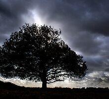 Big old black tree by John Westerveld