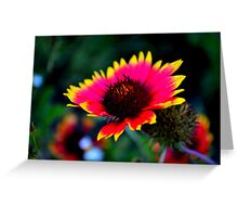 Abstract Indian Blanket Greeting Card