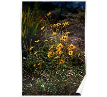 Family of Black Eyed Susans Poster