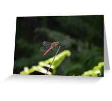 Dragonfly, Broome Greeting Card