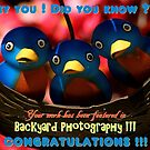 Backyard Photography Group Feature Banner by artisandelimage