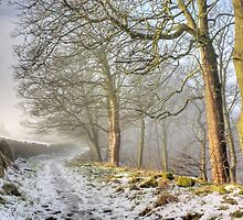 Winter Woods by fotohebden
