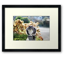 Hello sunshine Framed Print