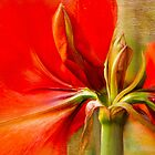 Amaryllis Splendour by Marilyn Cornwell