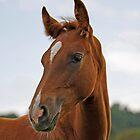 Portrait of a Foal by blueinfinity