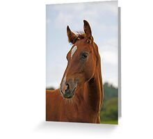 Portrait of a Foal Greeting Card