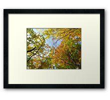 Treetops in autumn Framed Print