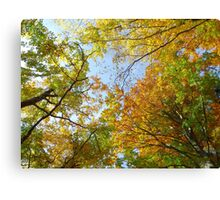 Treetops in autumn Canvas Print
