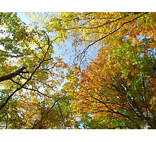 Treetops in autumn Photographic Print