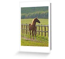 Chestnut Foal Greeting Card