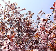 Plumblossoms in spring by Brevis