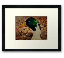 Daffy Duck Framed Print