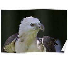 Ruffled Feathers Poster