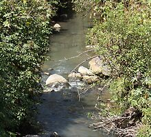 Stream Near Cotacachi by rhamm