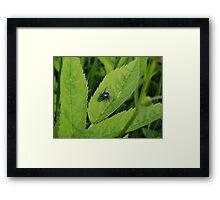 Colorful fly on a leaf Framed Print