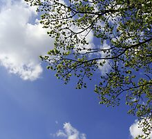 Sky with leafs and branches by Brevis
