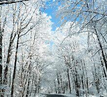 Snowy Winter Road Scene by Michael Shake