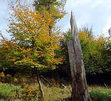 Dead tree in Autumn by Brevis