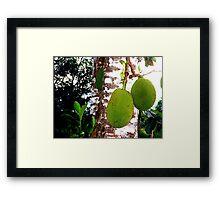 Jamaican Jackfruit Framed Print
