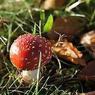 mushroom surprise by annet goetheer