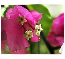 Open Flower Poster