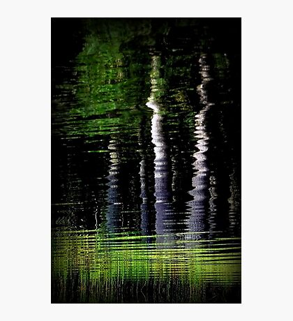 Yin and Yang: The Tao of Trees Photographic Print