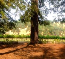 Redwoods and vineyards Sticker